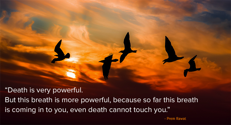 birds,Prem Rawat,quote