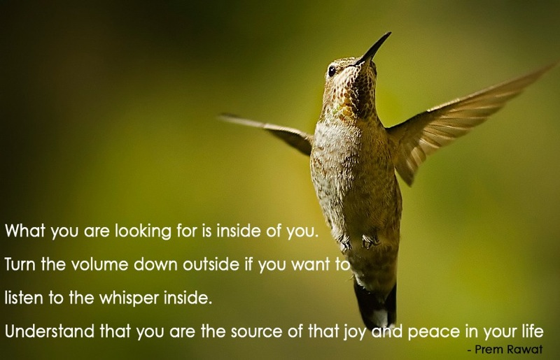 bird,flying,Prem Rawat,quote