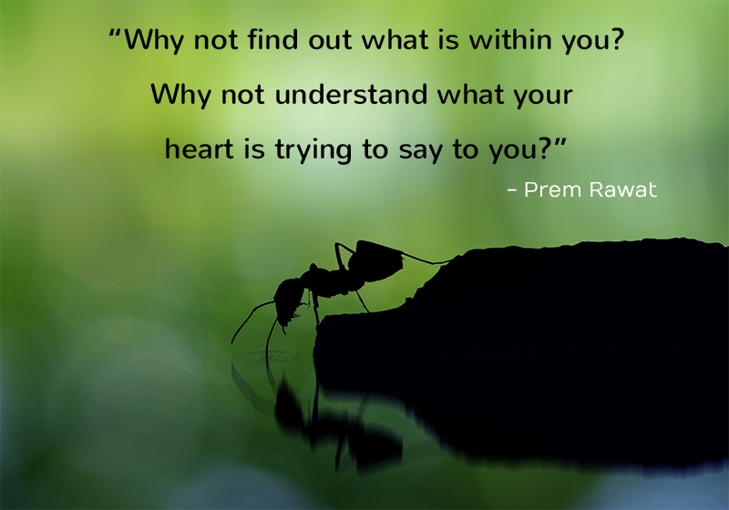 ant on water,Prem Rawat,quote