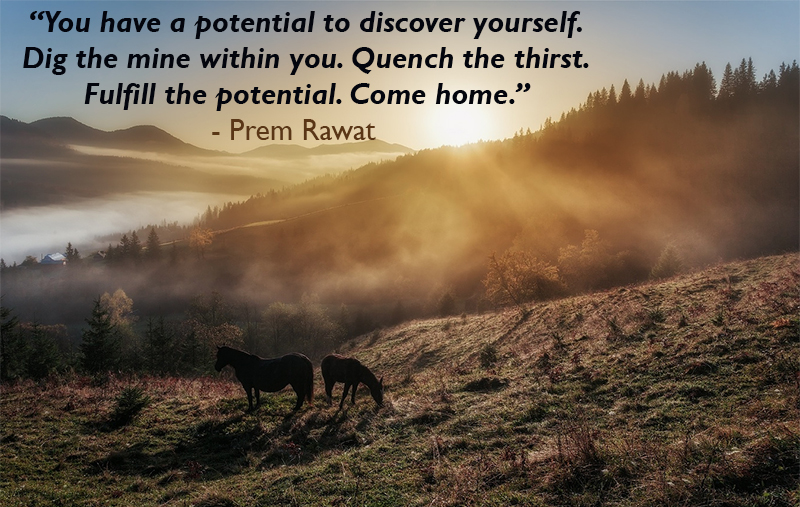 horse,Prem Rawat,quote