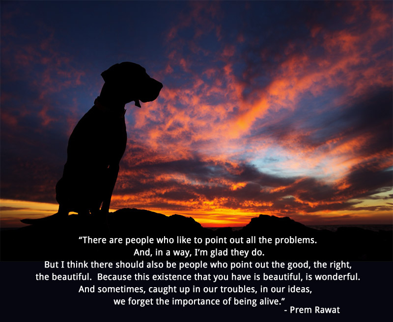dog, silhouette,Prem Rawat,quote