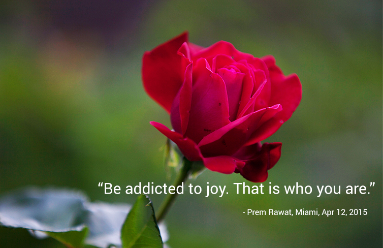 red rose,Prem Rawat, Miami, Apr 12, 2015,quote