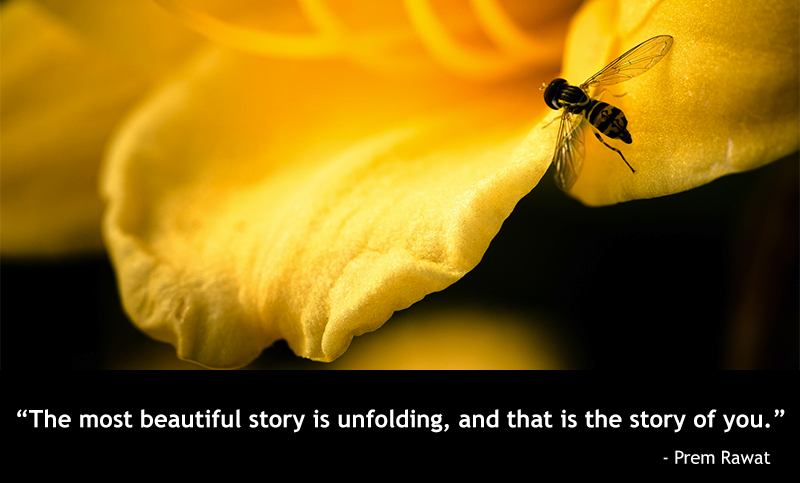 macro, bee,Prem Rawat,quote