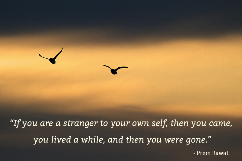 bird, silhouette,Prem Rawat,quote