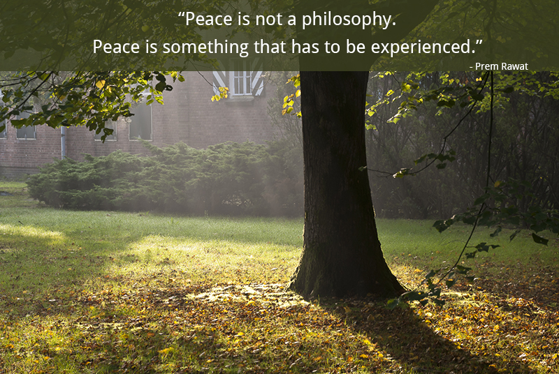 morning, tree,Prem Rawat,quote