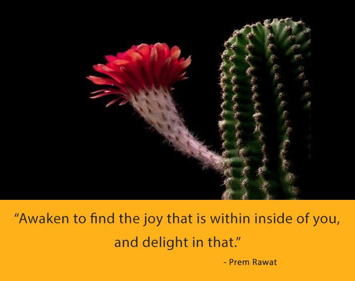 cactus,Prem Rawat,quote