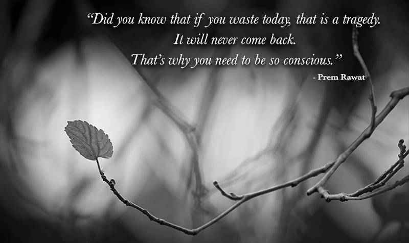 leaf,Prem Rawat,quote