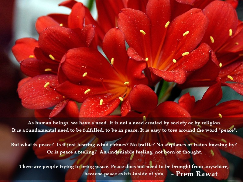 red flower,Prem Rawat,quote