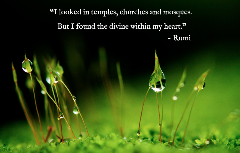 grass,dew,Rumi,quote
