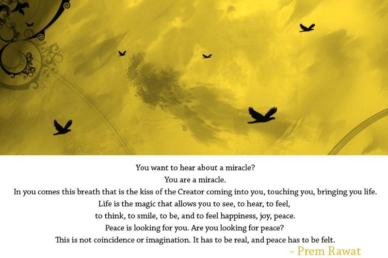 bird flying,sky,Prem Rawat,quote