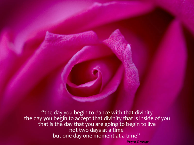 rose,petals,pink,Prem Rawat,quote