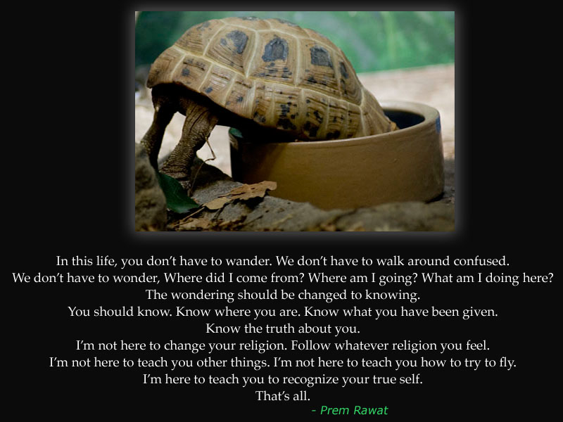 turtle,Prem Rawat,quote