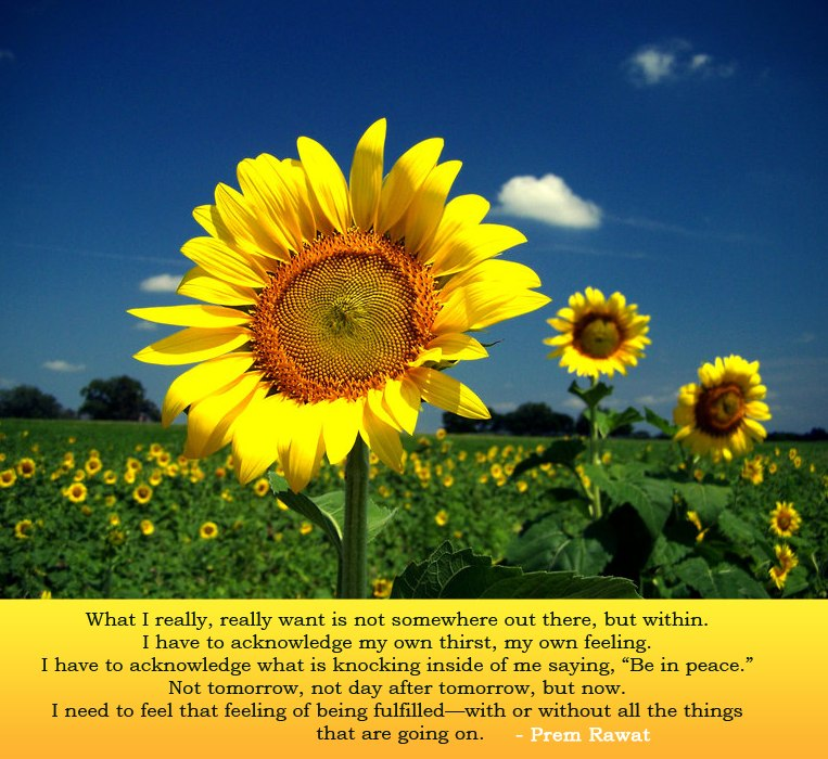 sunflower,Prem Rawat,quote