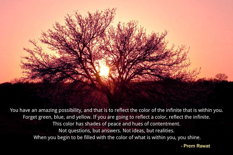 dried tree,sun,Prem Rawat,quote