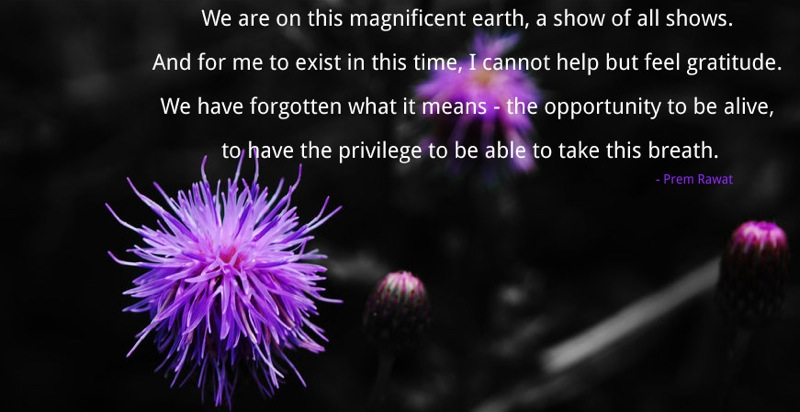 blue flower,Prem Rawat,quote