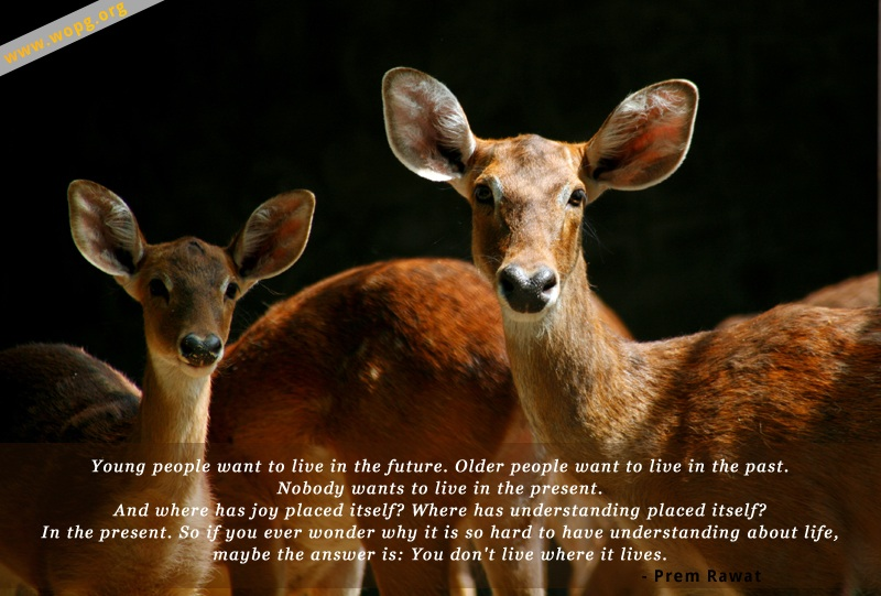 deer,Prem Rawat,quote