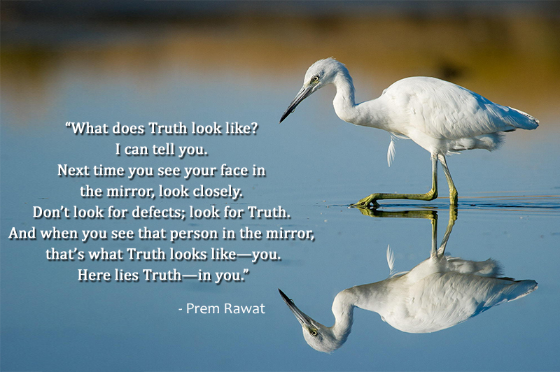 swan,bird,reflection,Prem Rawat,quote