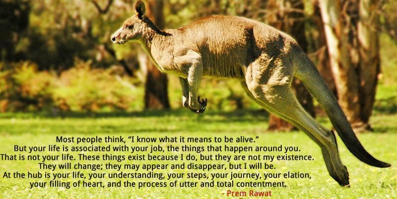 kangaroo,Prem Rawat,quote