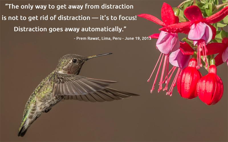 bird,polination,Prem Rawat, Lima, Peru - June 19, 2013,quote