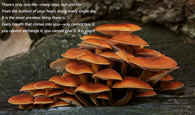 mushrooms,Prem Rawat,quote