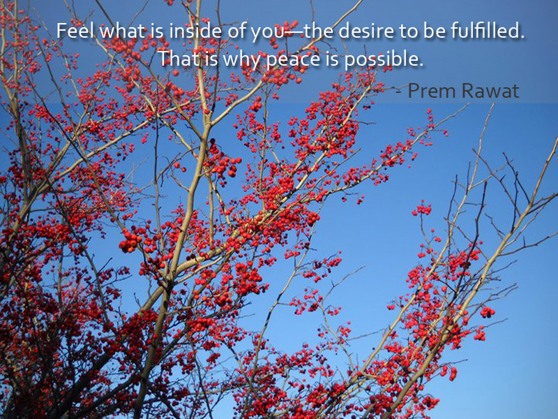 bush,fruits,Prem Rawat,quote
