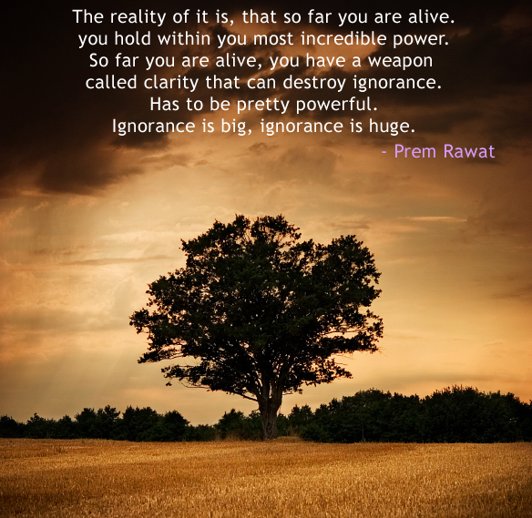 tree,evening,Prem Rawat,quote