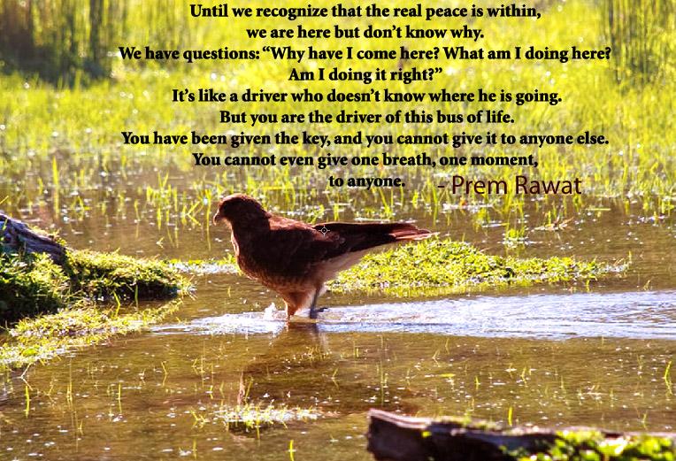 pigeon,Prem Rawat,quote