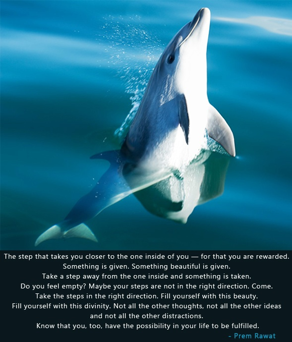 dolphin,fish,jumping,Prem Rawat,quote