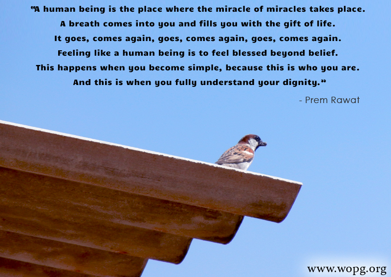 bird perched,Prem Rawat,quote