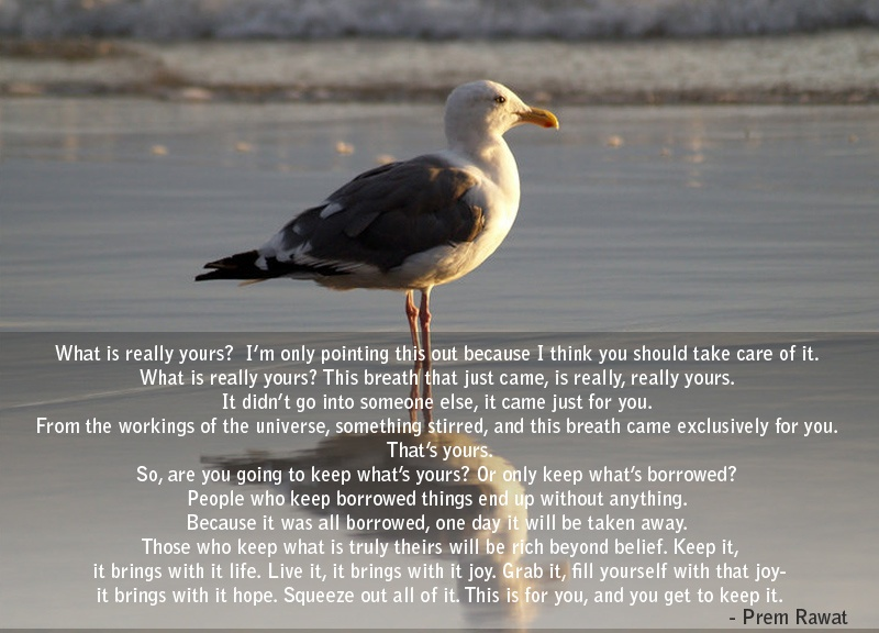 sea gull,bird,beach,Prem Rawat,quote