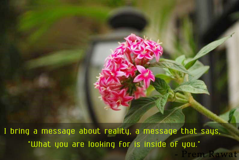 flower macro,Prem Rawat,quote