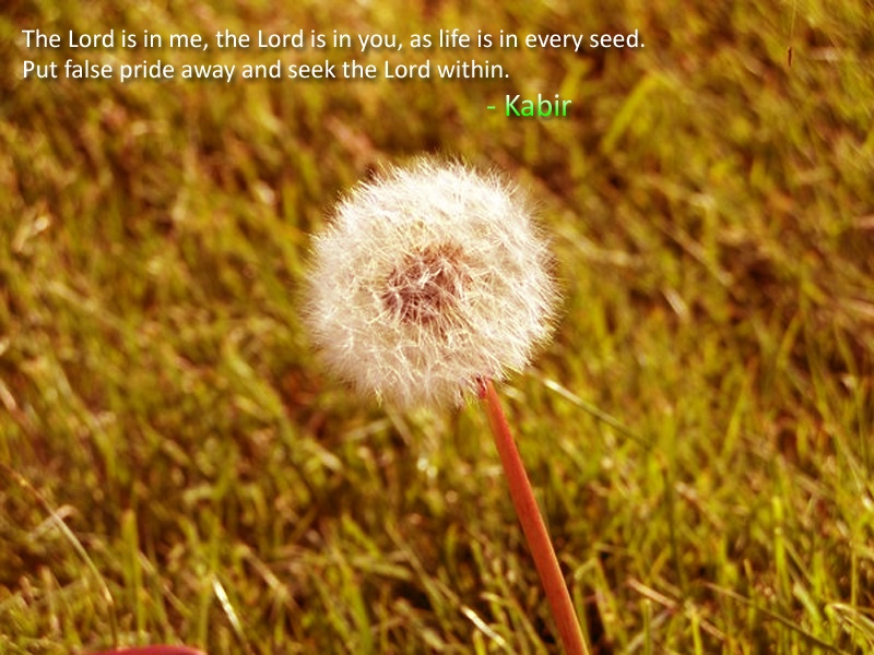 cotton seed,field,Kabir,quote