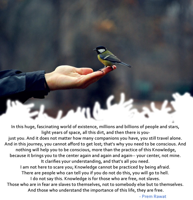 small bird,perch,hand,Prem Rawat,quote