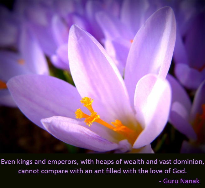 white flower,Guru Nanak,quote