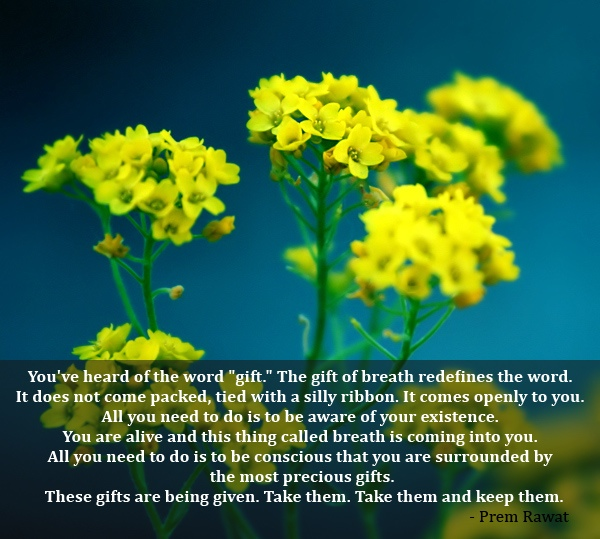 yellow flower,tiny,Prem Rawat,quote