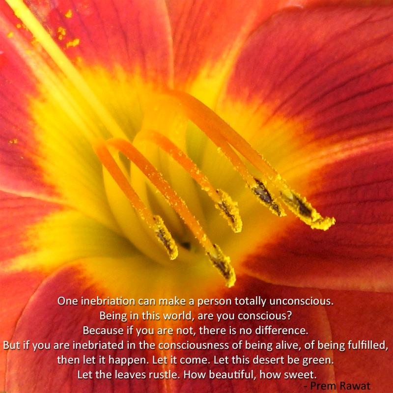 flower,anther,stigma,pollen,Prem Rawat,quote