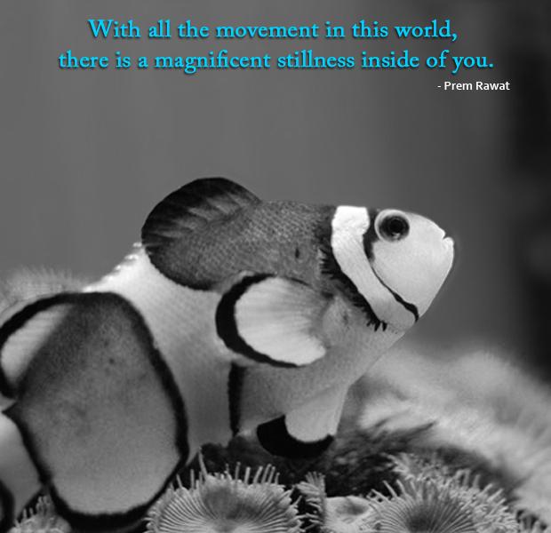 flsh, b&w,Prem Rawat,quote