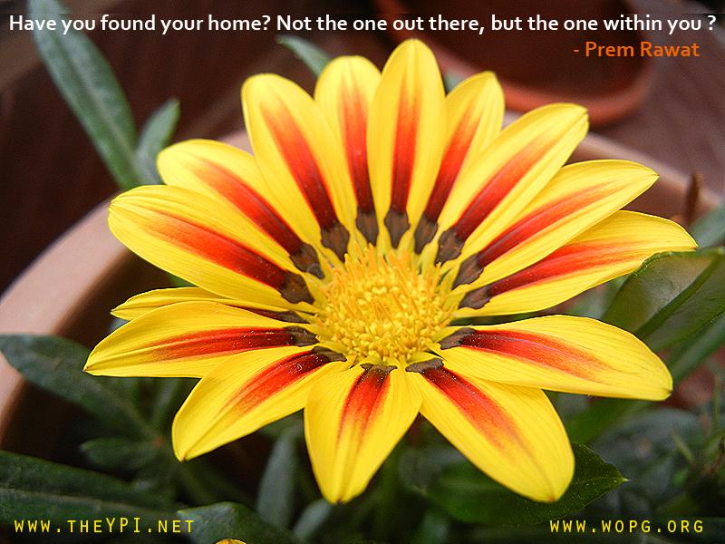 flower,yellow,Prem Rawat,quote