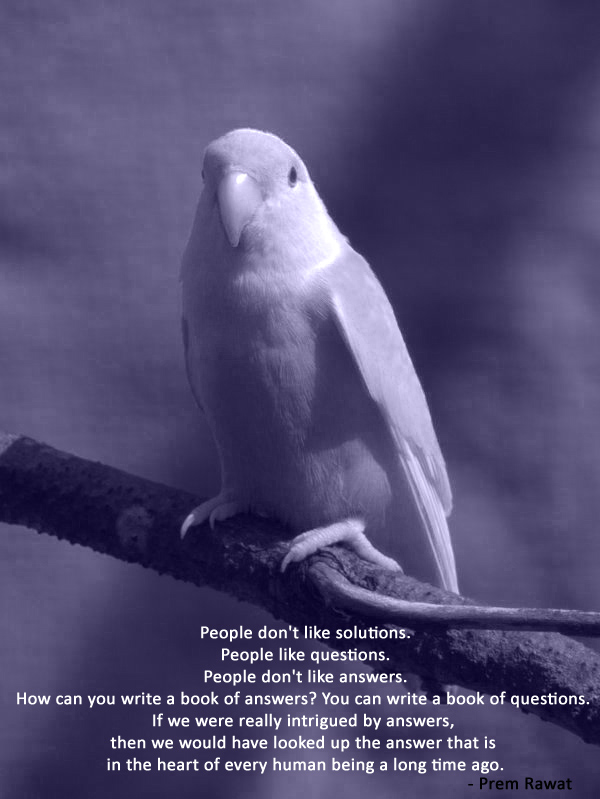 parrot,bird,Prem Rawat,quote