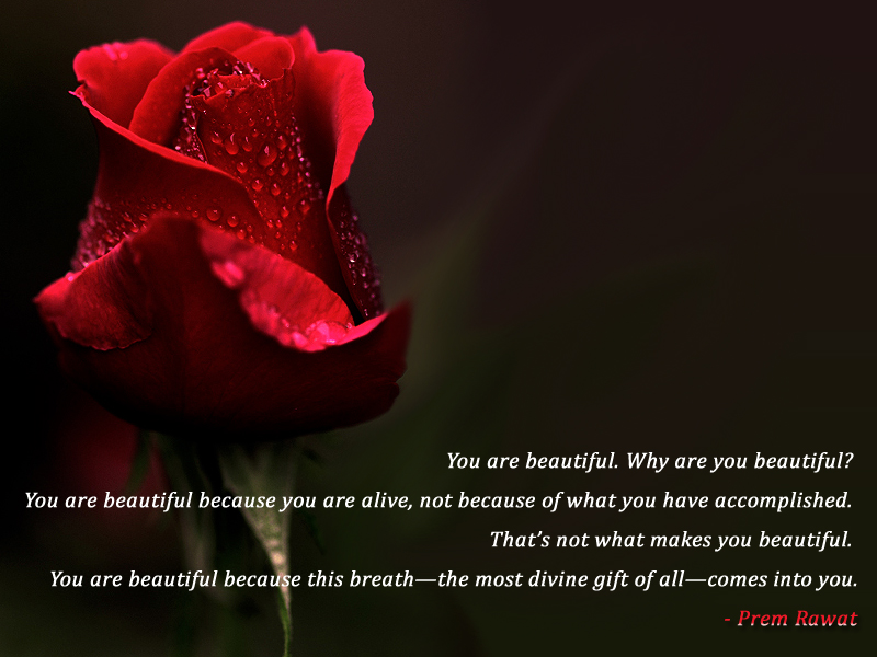 red petals, rose,dew drops,Prem Rawat,quote