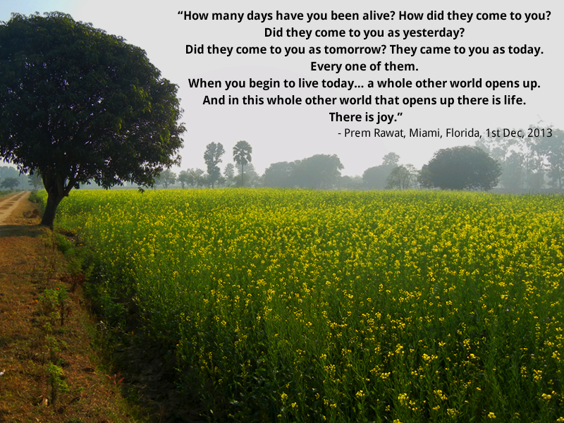 yellow,sarso, field,Prem Rawat, Miami, Florida, 1st Dec, 2013	,quote