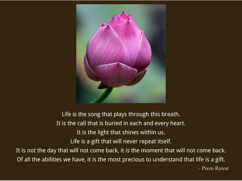 tulip,flower,Prem Rawat,quote