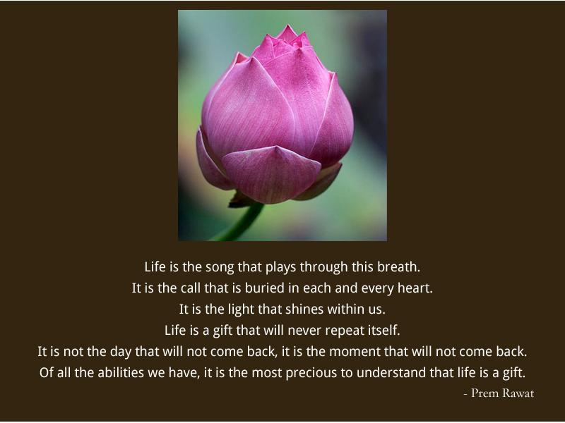tulip,flower,Prem Rawat,quote