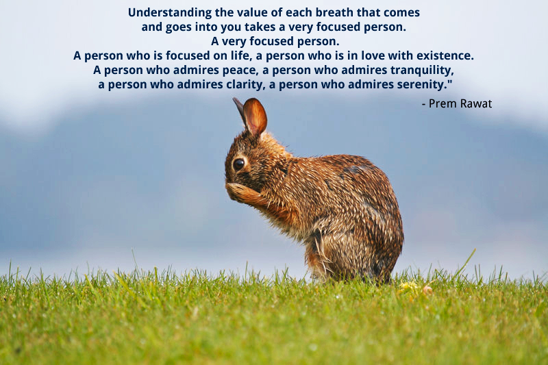 rabbit,field,Prem Rawat,quote