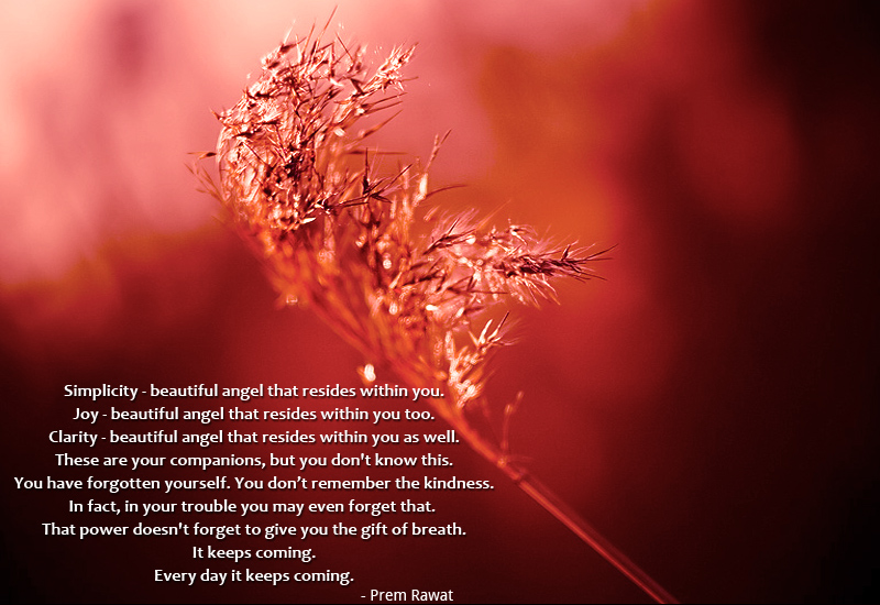 flower,shrub,Prem Rawat,quote