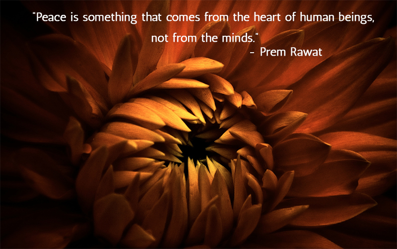flower,sepia,Prem Rawat,quote