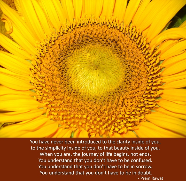 yellow flower closeup,Prem Rawat,quote