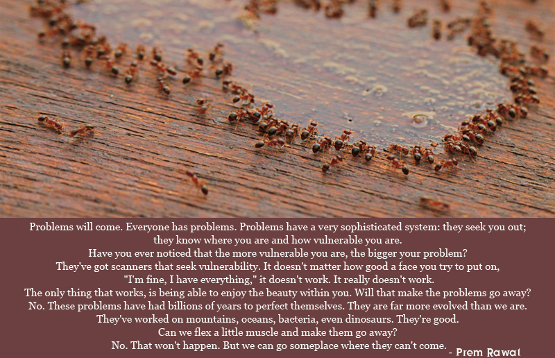 ants,drinking,Prem Rawat,quote