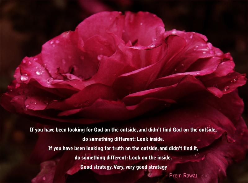 red petals, rose,dew drops,Prem Rawat,quote