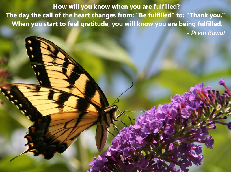 butterfly, yellow black,Prem Rawat,quote